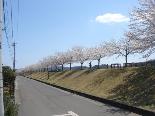 DSC07414桜.jpg